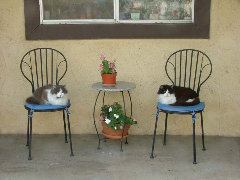 Two cats in the yard.
